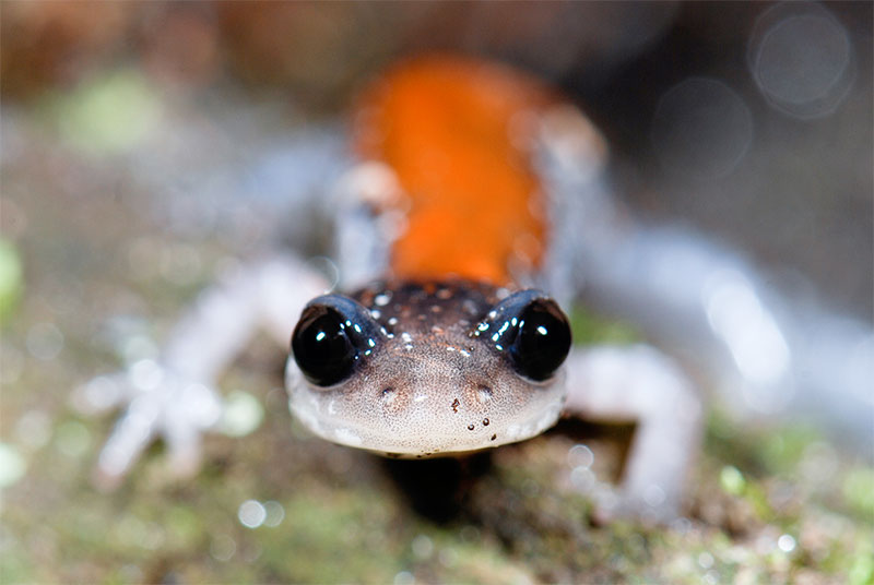 photo of a salamander or newt