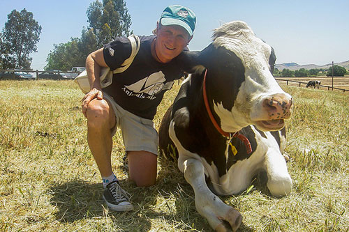 photo of a cow and a man