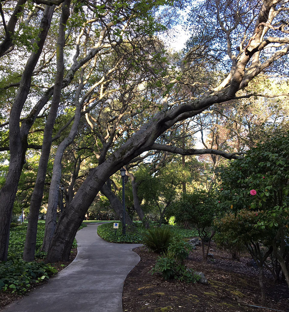photo of a tree-lined path