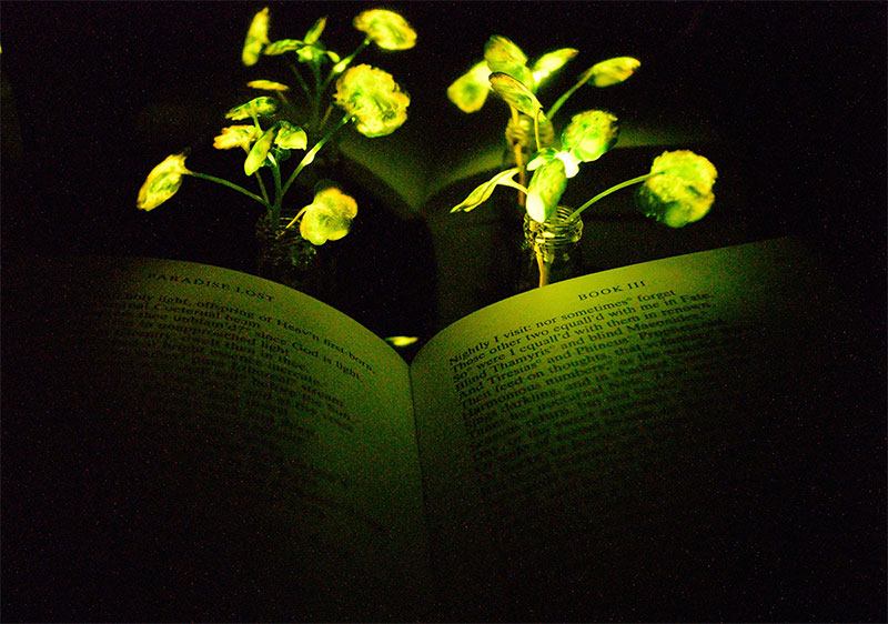 photo of a glowing plant