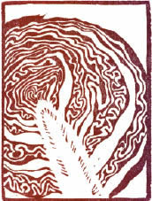 woodcut artwork of a cabbage