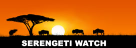 silhouette of wildlife under an accacia tree, words serengeti watch