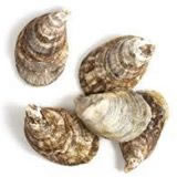image of some oyster shells