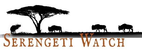 silhouette of wildlife under an accacia tree, words serengeti watch